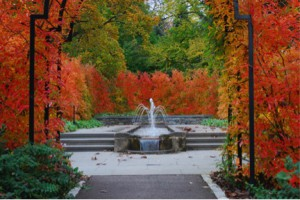 photograph of fall foliage and a fountain