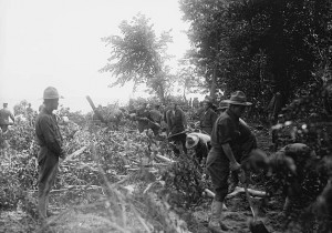 photograph of soldiers clearing brush