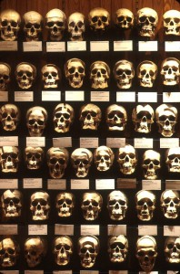 A display of some of the skulls held in the collections of the Mütter Museum.