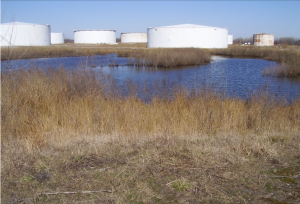 A color photograph of oil tanks standing in the marshlands on Petty Island