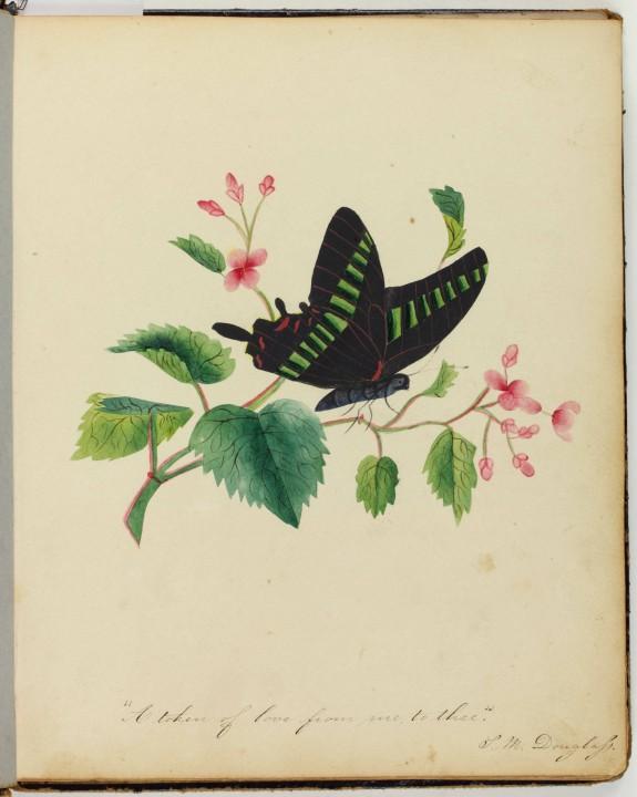 Entomology | Encyclopedia of Greater Philadelphia