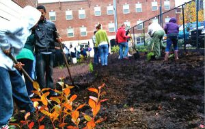 color photo of orchard planting at Evelyn Sanders Townhouses in Fairhill.