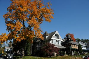 color photo showing three 1900-era houses and a colorful tree towering at left.