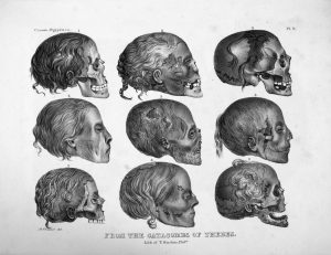 a black and white illustration of nine mummy skulls with hair