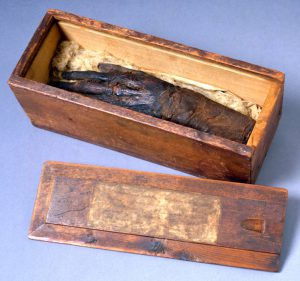 a color photograph of a mummy's severed hand in a wooden box