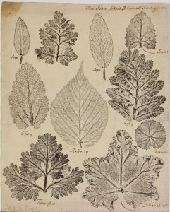 Copy of a print of inked nature pressings. Nine inked pressings of leaves of various types and sizes take up the page
