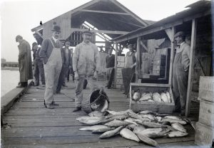 This black and white photograph shows a group of fishermen with the day's catch. A few men look down at the water while others pose near buckets and bins full of American shad.